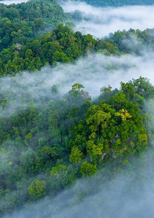 fog covered forest hills